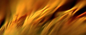 Photo: abstract-looking closeup of a paintbrush